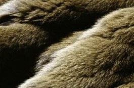 Raw Rabbit Skits texture