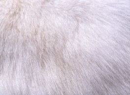 Leather And Fur Texture Free Download Page 2 Cadnav Com