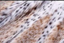 Raw Leopard Skins texture