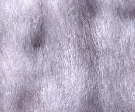 Leopard Cat Skins texture