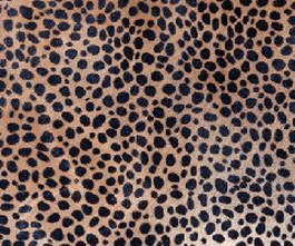 Sexy Leopard texture