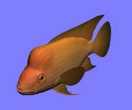 Red Devil fish 3d model