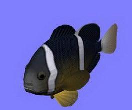 Rockfish 3d model