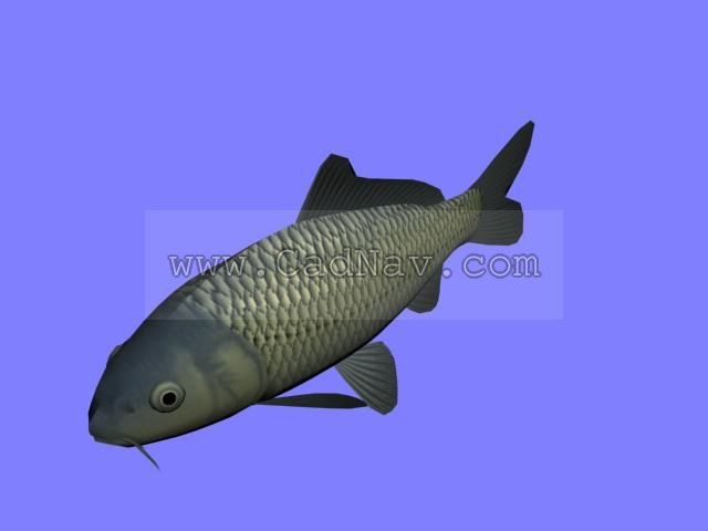 Koi Fish 3d Model 3ds Max Files Free Download Modeling