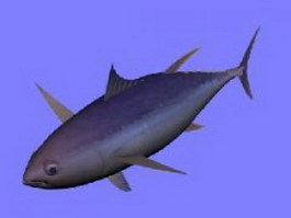 Yellowfin tuna fish 3d model