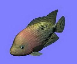 Redhead fish 3d model