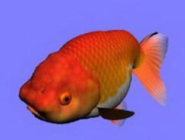 Rantyu goldfish 3d model