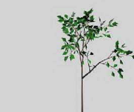 Broad-leaved tree 3d model