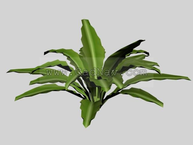 Leafy Plants 3d Model 3ds Max 3ds Files Free Download