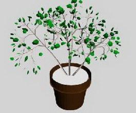 Pot foliage 3d model