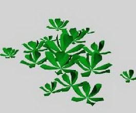 Aquatic plant 3d model