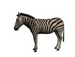 Plains zebra 3d model