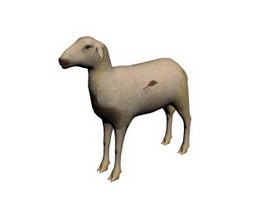 Domestic sheep 3d model