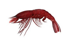 Large prawn 3d model