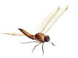 Dragonfly 3d model