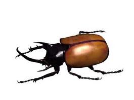 Beatle beetle 3d model