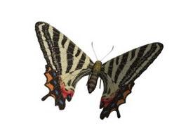 Puziloi Luehdorfia Butterfly 3d model