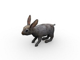 White rabbit 3d model
