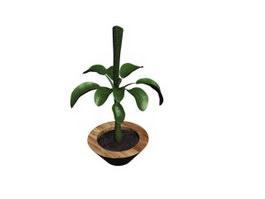 Indoor plant bonsai 3d model