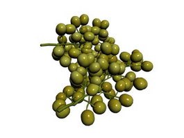 Two bunches of grapes 3d model
