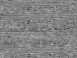 Grey old oak texture