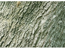 Cork oak bark texture