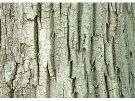 Red oak bark texture