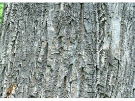 Cork Oak Tree bark texture