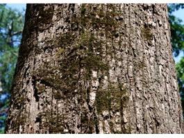 Moss on bark texture