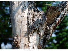 Bark off the tree texture