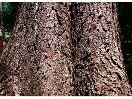 Old tree in sunlight texture