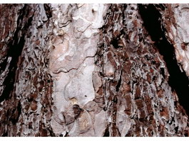 Ancient tree bark texture