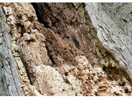 Decayed trunk texture