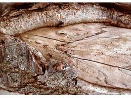 Split bark of tree texture
