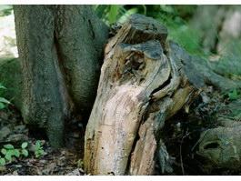 Rotten stumps texture