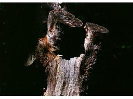 Ancient stumps texture