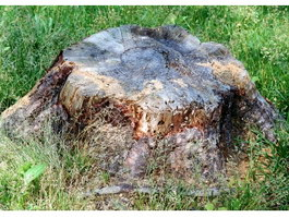 Stump in the grass texture