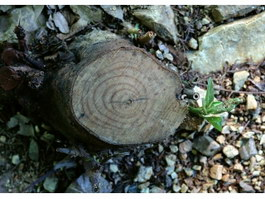 Budded stumps texture