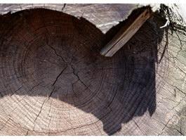 Sawn timber face texture