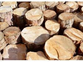Sawn logs texture