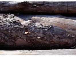 Cut wooden logs texture