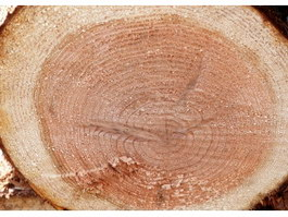 Growth ring of wood texture