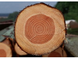 Tree Growth Ring texture