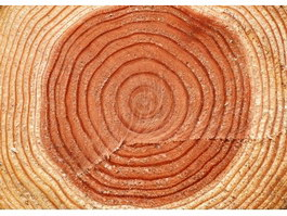 Timber growth ring texture