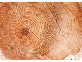 Tree ring growth texture