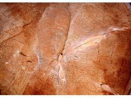 Saw log texture