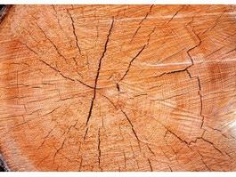 Gash of timber texture