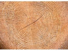 Crack of timber texture