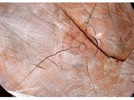 Fractal crack of wood texture