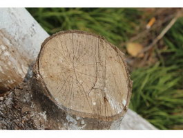 Sawing branch texture